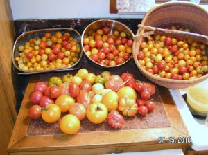 the year of cherry tomatoes!