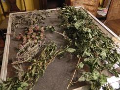 mixed herbs drying