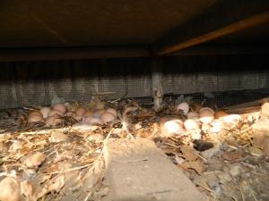 Eggs under welding bench